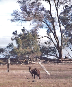 roo from kitchen window
