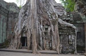 cambodia 2 029