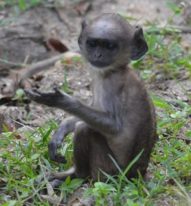 baby monkey doing yoda pose for me :)
