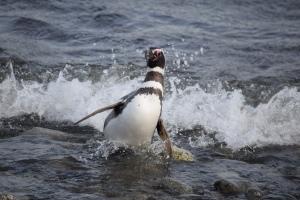 penguin nirvana